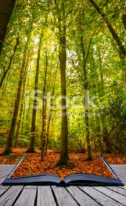 stock-photo-19335004-autumn-fall-forest-landscape-magic-book-pages